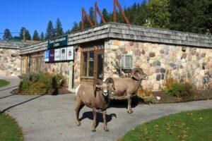 Kootenay Visitor Centre
