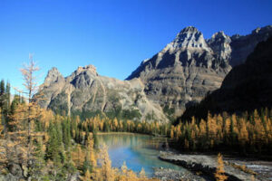 Fall colours are a major attraction for hikers at Lake O'Hara in September.