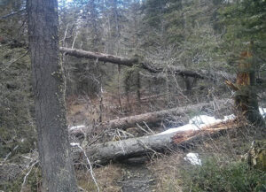 Deadfall litters Waterton's lower Crypt Lake trail in early May. For a unique look at what this popular trail looks like in the spring, check out Parks Canada's Trail Report Hiking Crypt Lake trail-spring 2016. Photo courtesy of Parks Canada.