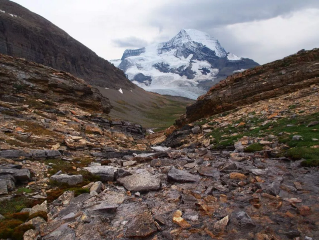 Looking back at Mount Robson on the ascent to the meadows of Snowbird Pass. Bruce Nielsen photo.