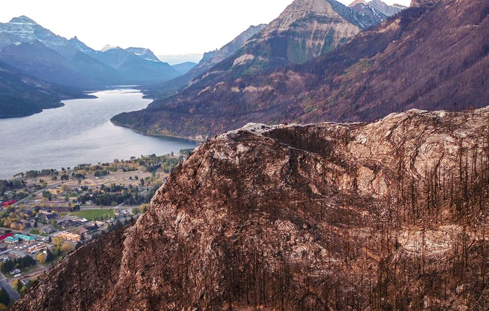 Post wildfire recovery in Waterton Park